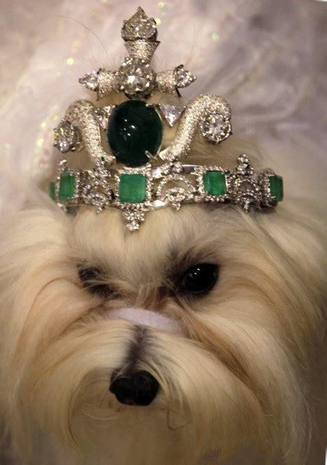 thai designer reveals dog tiara