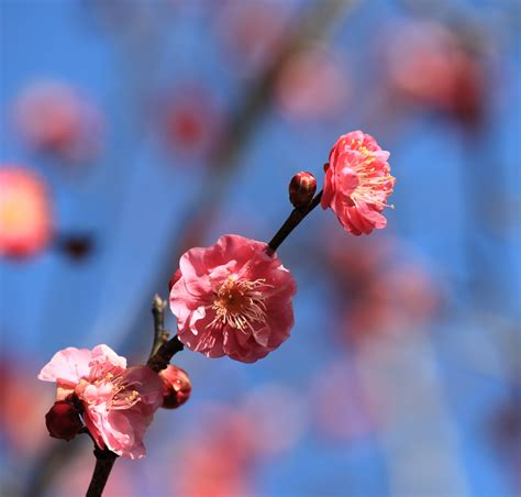 Free Images : branch fruit berry flower petal food