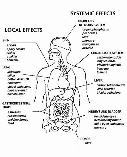 Water Effects Health Pollution Human Organic Persistent