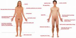 Poorly designed parts of the human body | More Attractive ...