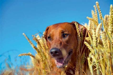 Vegane Ernährung Hunde