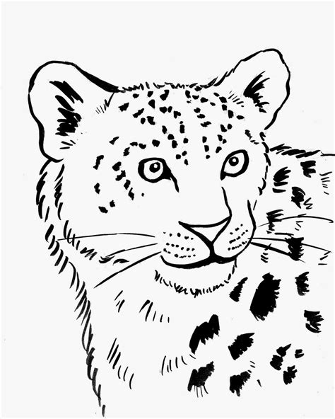 Simple Leopard Drawing At Getdrawingscom Free For
