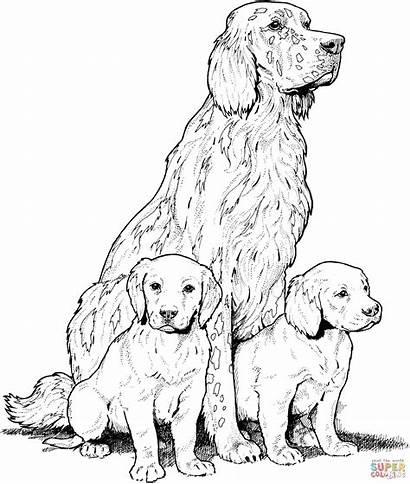 Labrador Coloring Puppies Retriever Printable Dogs Golden