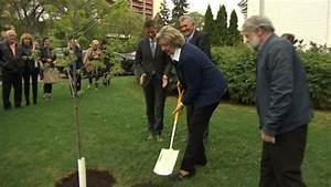 New 'Regal Celebration' red maple tree planted on Manitoba ...