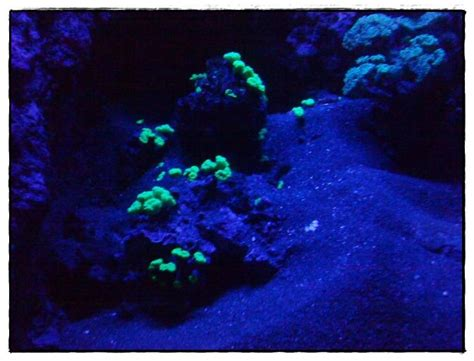 visite aquarium la rochelle 28 images week end en charente maritime avec visite