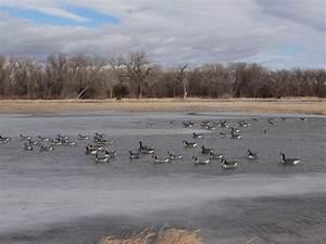 Huntin U0026 39  Geese  You Don U0026 39 T Need Water