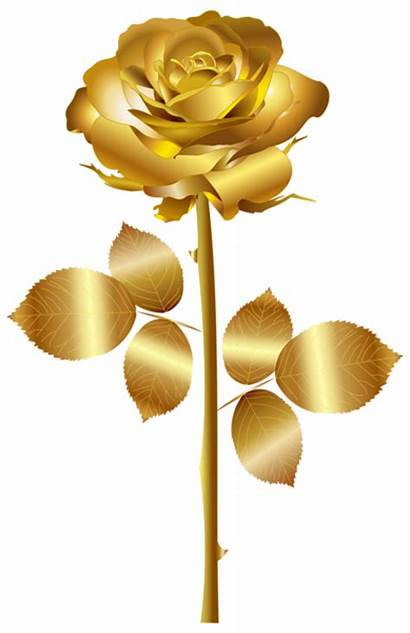 Rose Gold Clip Clipart Golden Roses Transparent