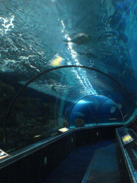 mall of america aquarium sea minnesota aquarium