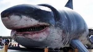 Biggest Sharks Ever Caught - Elite Facts