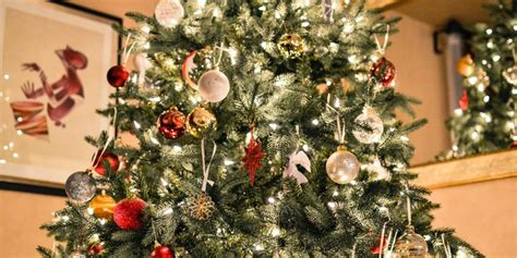 potted live christmas trees in san diego living tree care everything you need to