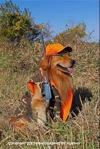 The Multi-Tasking golden retriever. Hunter and retriever ...