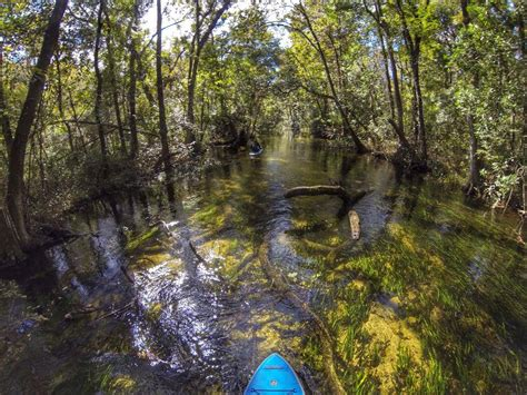 slough gum withlacoochee river dam visitflorida rivers