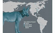 First dogs in the Americas arrived from Siberia ...