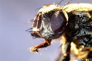 Insekten Im Haus : insekten im haus makrotreff ~ Lizthompson.info Haus und Dekorationen