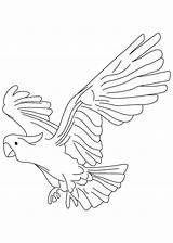 Parrot Coloring Pages Pirate Flying Getcolorings Printable Cockatoo Print Pittsburgh sketch template