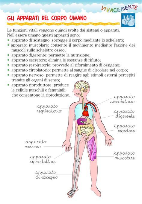 immagini corpo umano organi interni 28