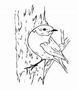 Coloring Bird Bluebird Eastern Pages Drawing Robin Drawings Colornimbus Getdrawings Sheets sketch template
