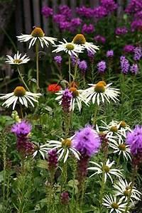 gartentipps und pflanzenthemen fur gartenfreunde und With garten planen mit gewächshaus balkon überwintern