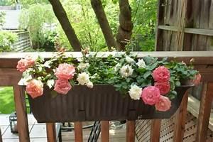 Rosen Für Balkon : blumenkasten f r balkon verwandeln sie ihren balkon in ~ Michelbontemps.com Haus und Dekorationen