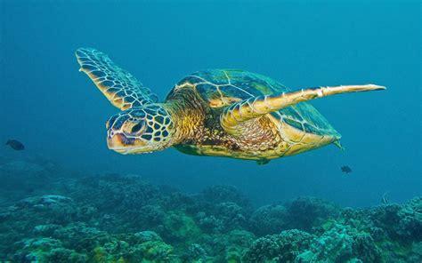 Fotos von Schildkröten Unterwasserwelt Tiere 1920x1200