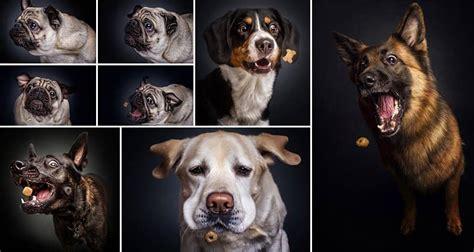 christian vieler takes wonderful   dogs