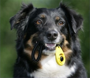clicker training pawsitive steps dog training