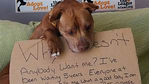 viral photo gets new york shelter dog chester adopted With adopting a new dog
