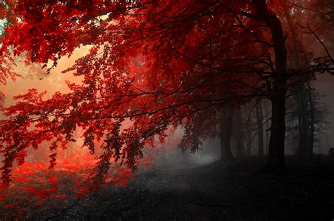 ultra hd red wallpapers background images