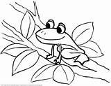 Frog Coloring Tree Frogs Para Colorear Sheet Clipart Ranas Dibujos Advertisement sketch template