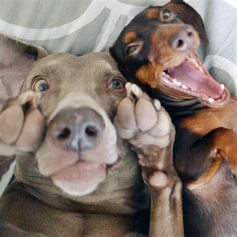 dogs   teach       selfies