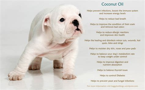 benefits  coconut oil  dogs baggy bulldogs