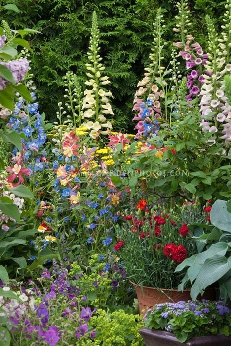 82 best images about fingerhut lupinie delphinium on gardens delphiniums and