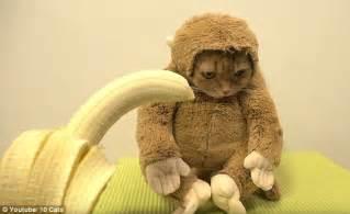 monkey cat monkey cat featuring a feline in an ape costume is
