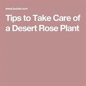 desert rose plant desert rose and take care on pinterest With how to take care of a garden