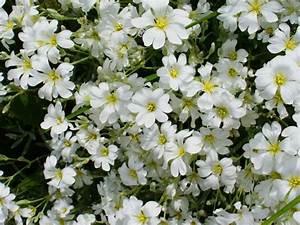 Names Of White Flowers 2 Desktop Background ...