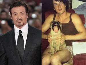 Sylvester Stallone's Dog Butkus Inspired Him For Rocky ...