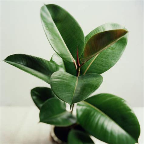 low light indoor plants safe for cats low light indoor plants in pretty easy to grow houseplants