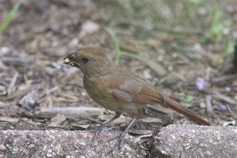 top fl birds identification for wallpapers