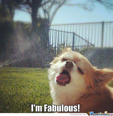 I Am Fabulous Meme - i m fabulous by hazzydog meme center