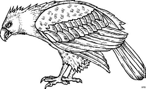 gefaehrlicher habicht ausmalbild malvorlage tiere