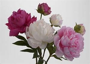 Rose Blanche Artificielle : fausse fleur pivoine photos de magnolisafleur ~ Teatrodelosmanantiales.com Idées de Décoration