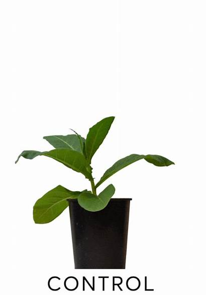 Photosynthesis Yield Conserve Water Boost Hacks Plant