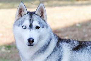 dogs with blue eyes meet these 6 dog