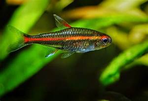JOE'S AQUAWORLD FOR EXOTIC FISHES MUMBAI INDIA 9833898901 ...