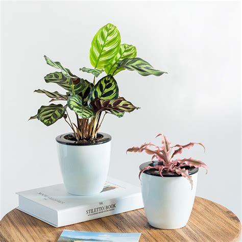 watering planters    everyday life easier