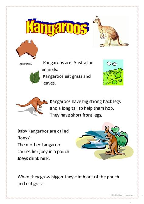 kangaroos easy worksheet  esl printable worksheets