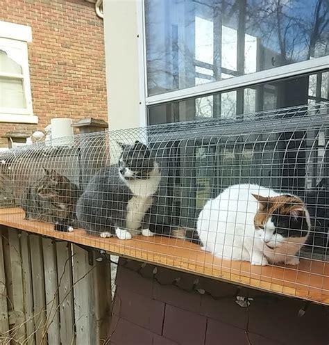 outdoor cat cage outdoor cat jungle cuckoo4design