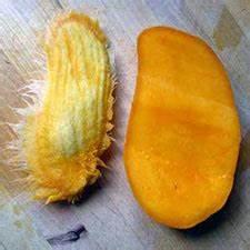 Planter Noyau Mangue : mangue faites pousser votre manguier ~ Melissatoandfro.com Idées de Décoration