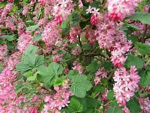 Arbuste Fleuri En Pot : plante fleurie pour pot exterieur gallery of arbuste en ~ Premium-room.com Idées de Décoration
