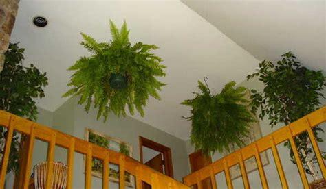 enlever humidité chambre 9 plantes d 39 intérieur qui nettoient l 39 air et qui sont